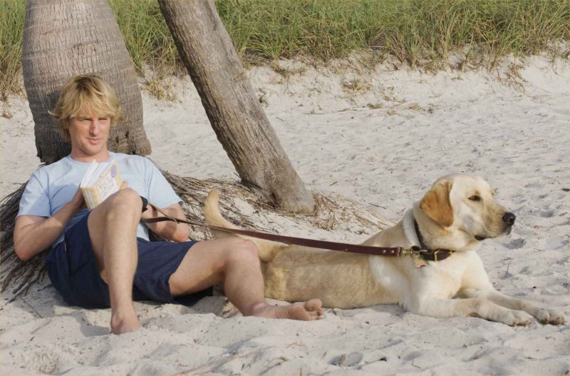 marley and me. Marley and Me | Corona Coming